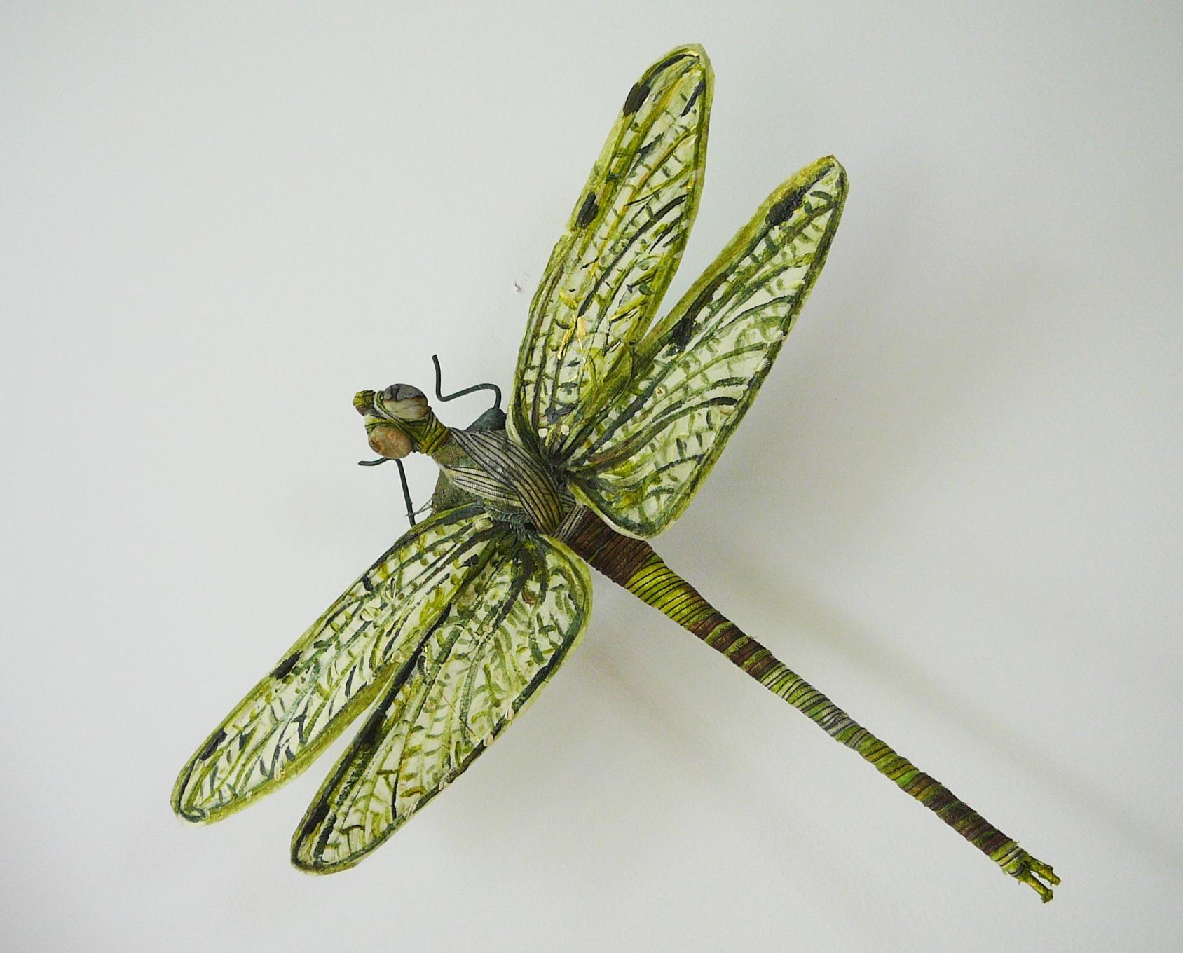 A essay on dragonfly