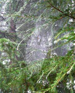 spider web #1