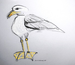signed seagull with orange feet