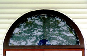 tree in window
