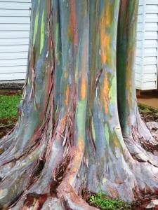 Hawaii 2012 141
