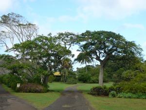Hawaii 2012 173