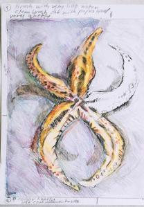 Painting Watercolour Starfish