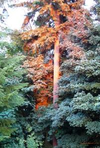 Evening light on trees