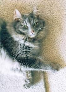 Meeka Cat 2