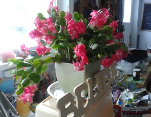 Christmas Cactus in the art room