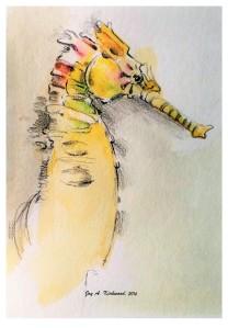 1-seahorse-drawing-2