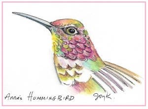 bird-drawing-annas-hummingbird